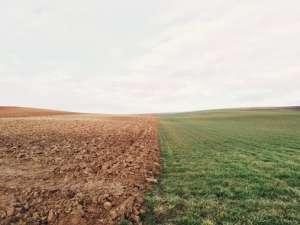 Co zmieni nowa ustawa o kształtowaniu ustroju rolnego? I co najważniejsze, kto na tym straci?