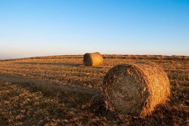 Analiza i porównanie najlepszych produktów bankowych dla sektora rolno – spożywczego