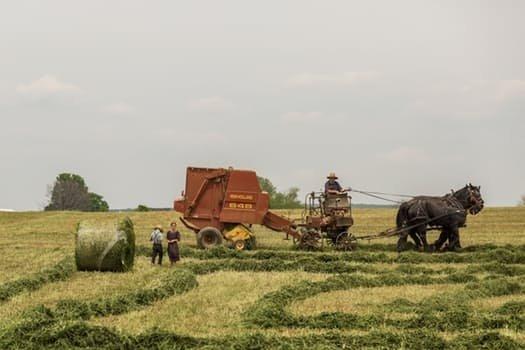 Z jakich ubezpieczeń mogą skorzystać rolnicy? Analiza wybranych polis ubezpieczeniowych  dla rolników